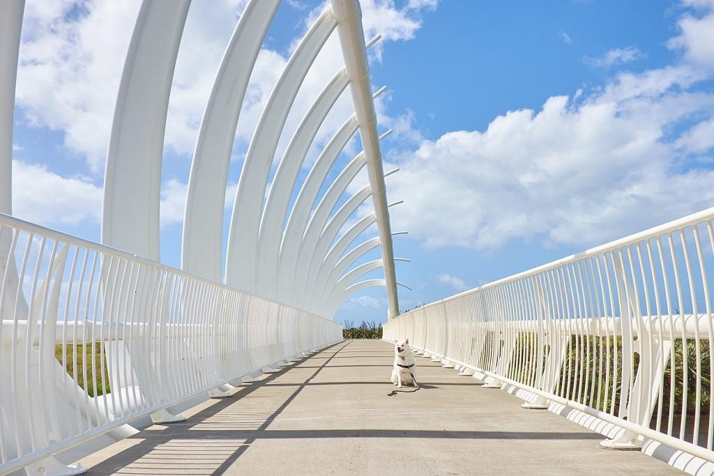 Te Rewa Rewa Bridge, Taranaki
